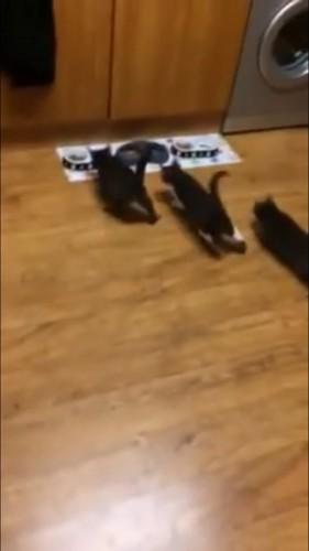 お皿に向かう子猫
