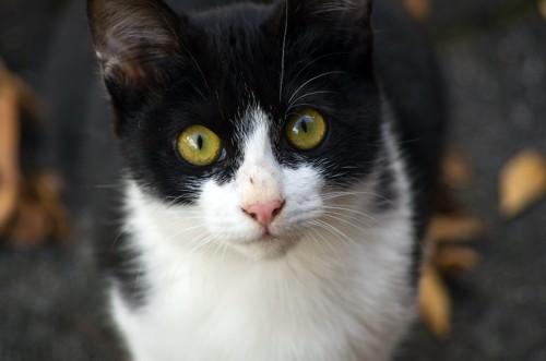 こちらをジッと見つめる猫