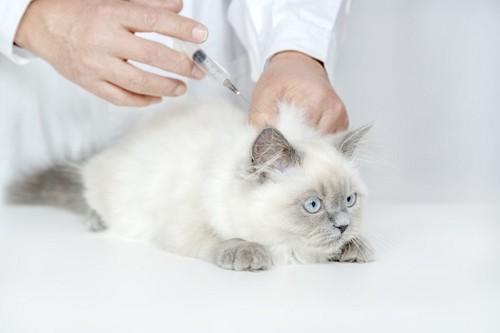 予防接種を受ける子猫
