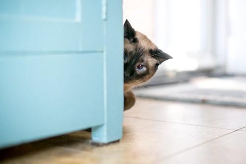 物陰から様子を見る猫