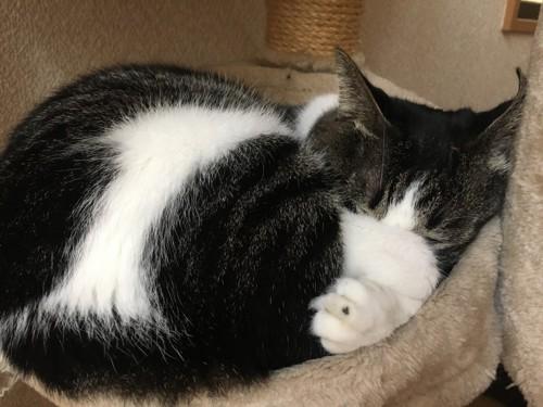 ハンモックで寝る愛猫