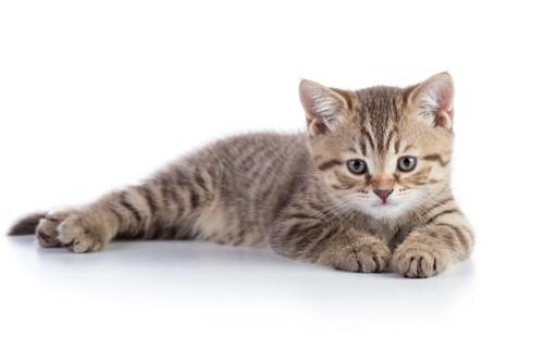 静かそうな猫