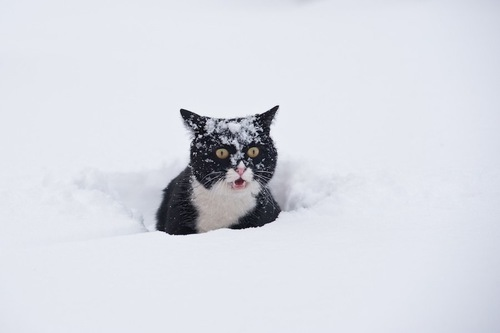 雪に埋もれて驚いた表情の猫