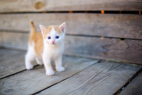 ベンチの上を歩く茶白の子猫