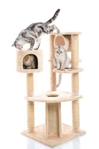 キャットタワーで遊ぶ猫