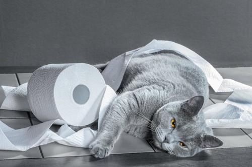 トイレットペーパーにからまっている猫