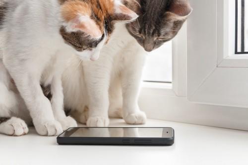 スマホを眺める猫たち