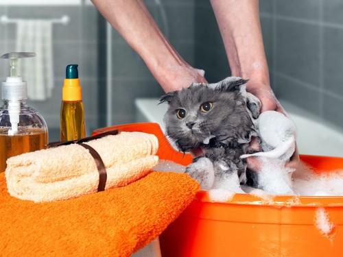 用意された道具類とシャンプー中の猫