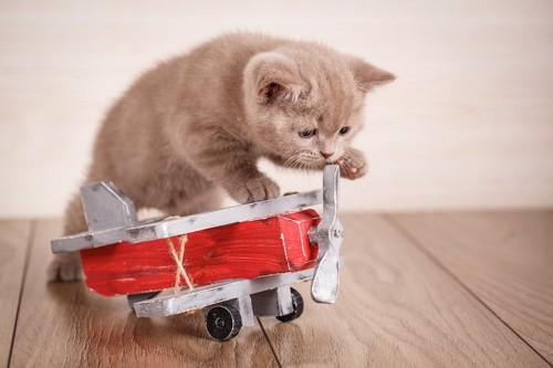 飛行機のおもちゃと子猫