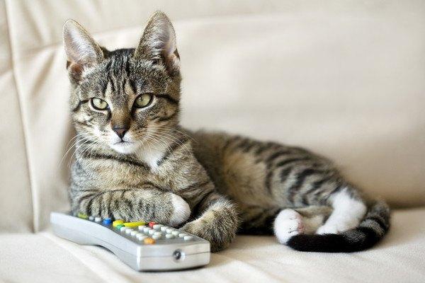 18395614 リモコンを踏む猫