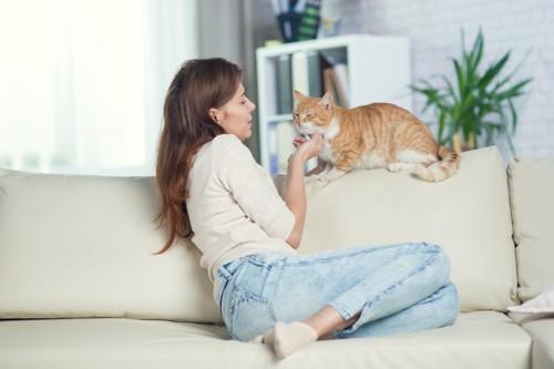 ソファーに居る猫