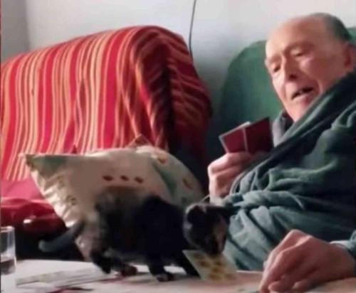 ソファに座る男性とカードを咥えた子猫