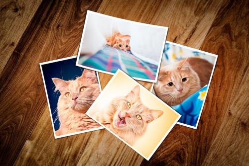 床に置かれた猫の写真