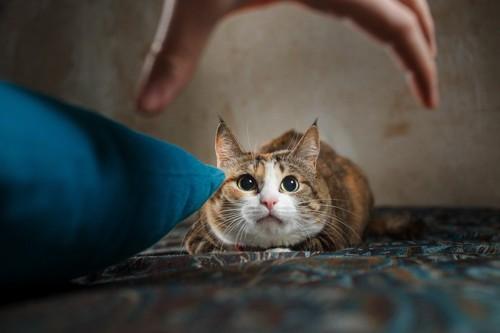 手に怯える猫