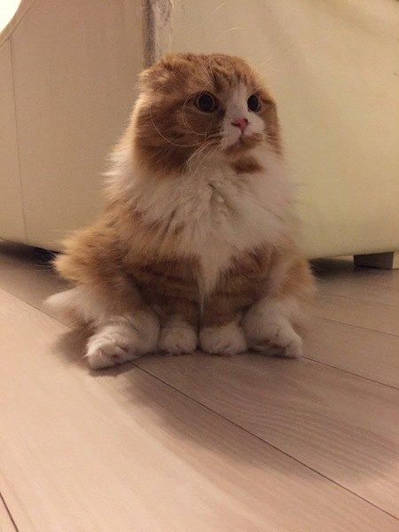 足を投げ出して遠くを見る猫