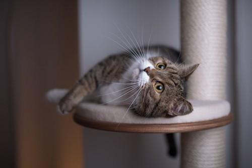 匂いをこすりつける猫