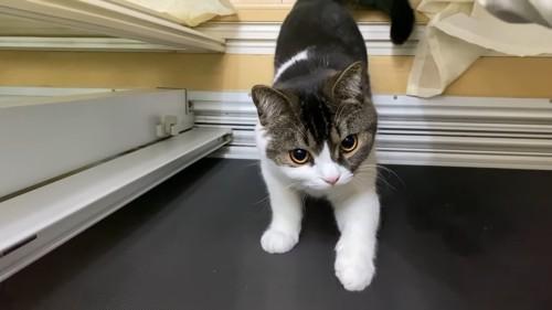 網戸に前足をついて立つ猫