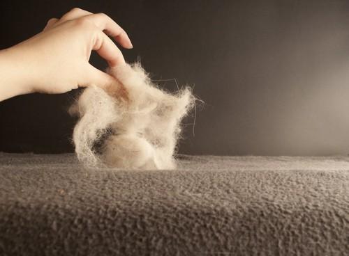 猫の抜け毛を指でつまむ人