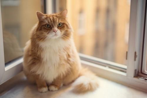 体格のいい猫