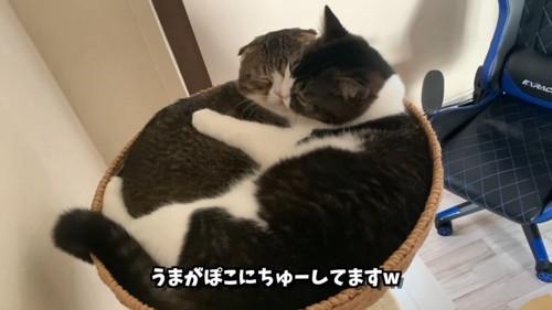 顔と顔をくっつける猫