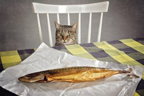 テーブルの上の焼き魚を狙う猫