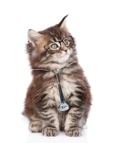 ドクターの格好をした子猫