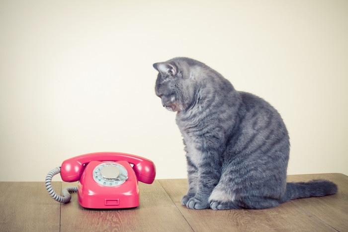猫とダイヤル式電話