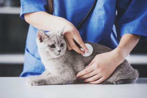 病院で獣医師の診察を受ける猫