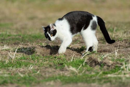 空き地で砂をかく猫