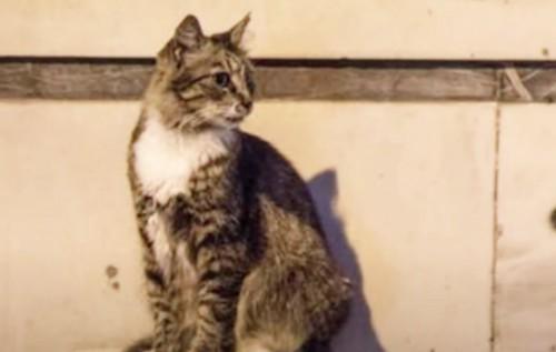 屋外に座るキジトラ猫