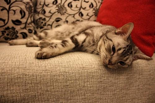 ぐったりしている猫