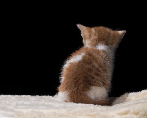 哀愁漂う子猫の後ろ姿