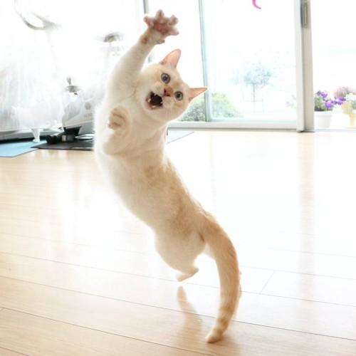 踊るチャコちゃん4