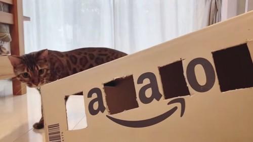 ダンボールの箱と猫