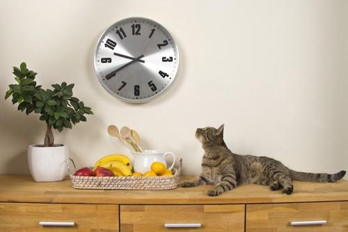 壁の時計を見つめる猫
