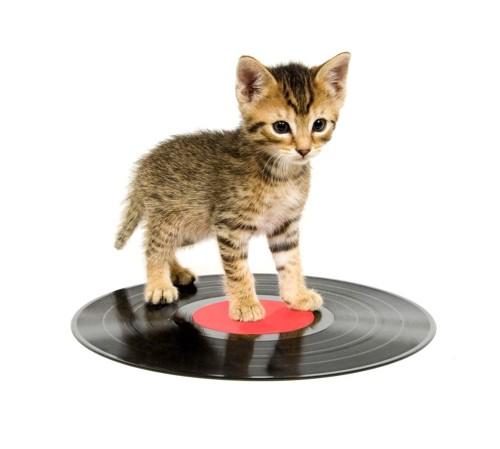 レコードと猫