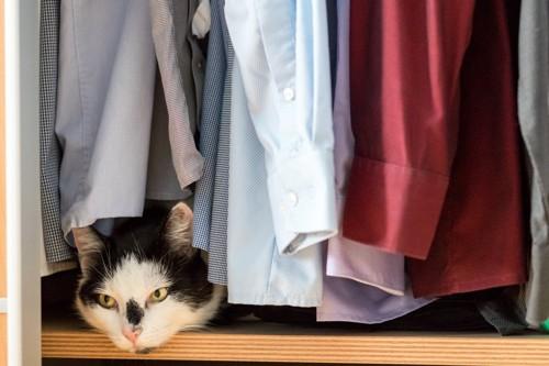 クローゼットの服の下から覗く猫