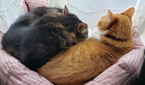 後ろ向きでベッドに入っている2匹