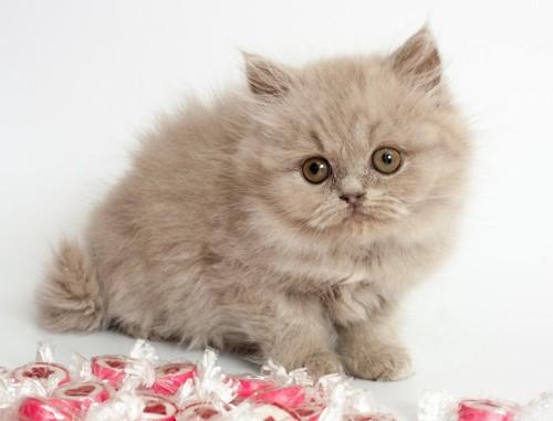 子猫とキャンディー