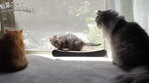 窓の近くの子猫と2匹の成猫