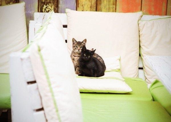 クッションにいる二匹の猫
