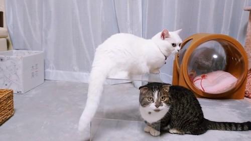 箱の上に乗る猫、中に入る猫