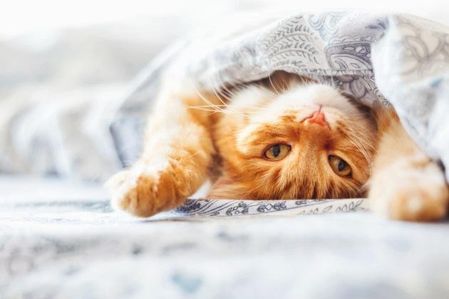 ひっくり返っている猫
