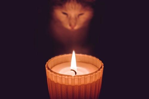 アロマキャンドルと猫