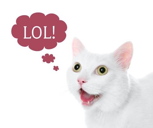 言葉を話しているような猫