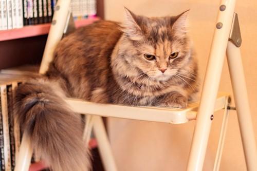 しっぽを下に垂らして座る猫