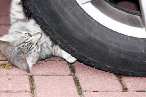 タイヤの下にいる猫