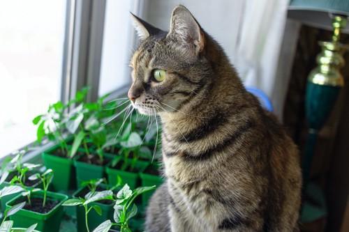 窓辺に置かれた植物の前に座って外を見つめる猫
