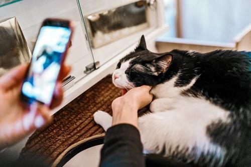 スマホを見る人と顎をなでられる猫