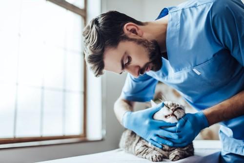 獣医師に歯を診察されている猫